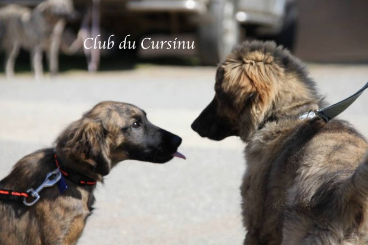 Club du cursinu