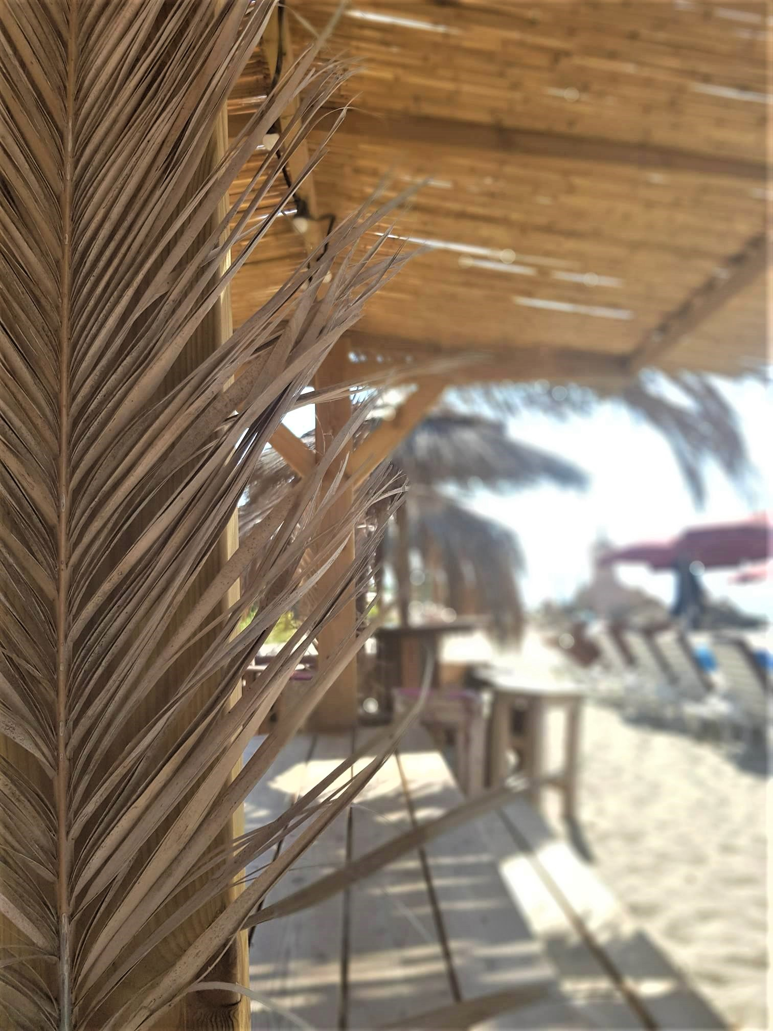 clioandco blog voyage corse plage à voir goeland paillote