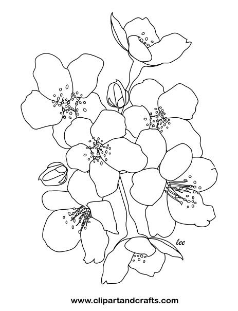 Garden and Flower Coloring Pages for Adults