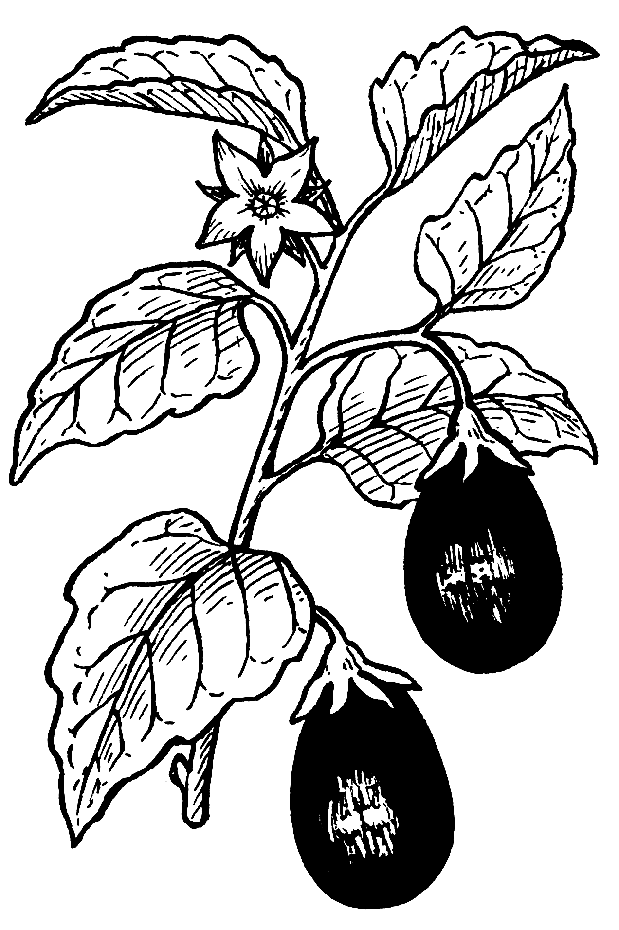 Line Drawings Of Vegetables