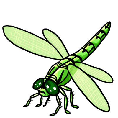 dragonflies drawings - clipart