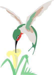 hummingbirds clipart