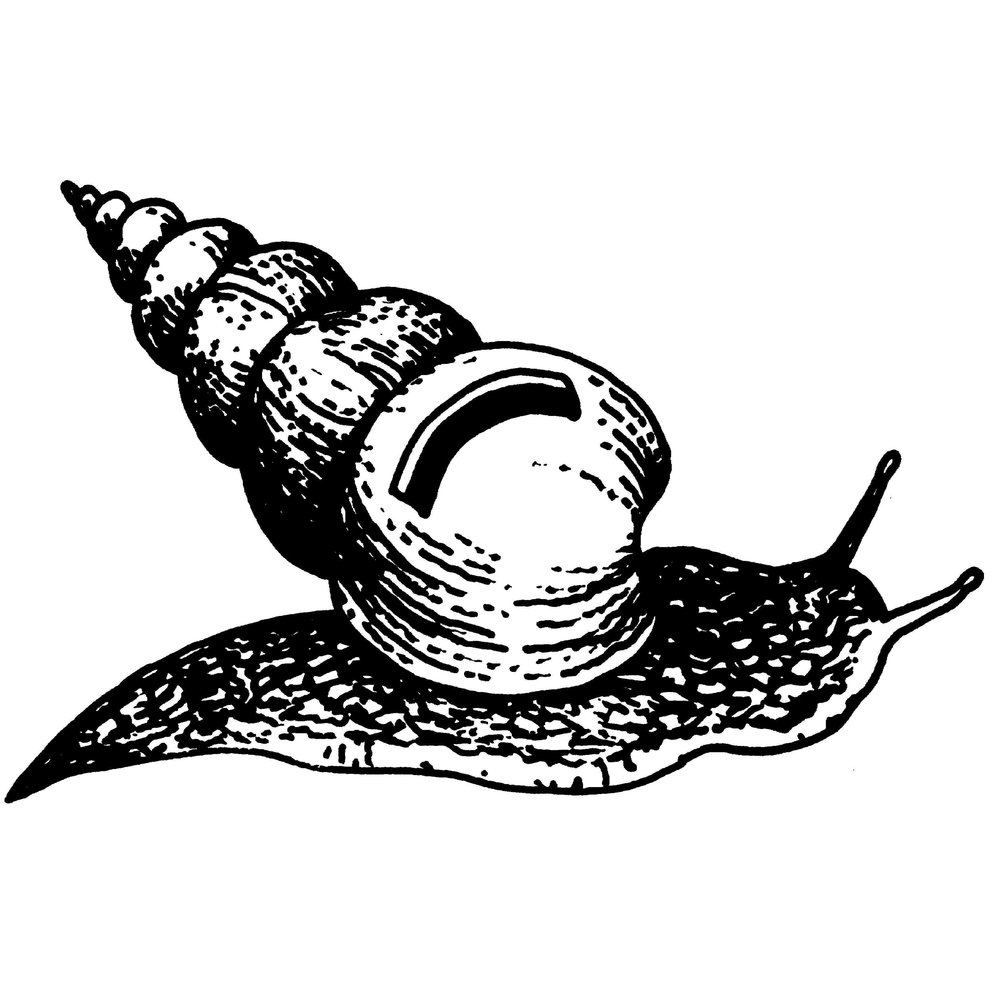 Snail Drawings