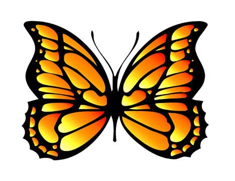 butterfly graphic design idea