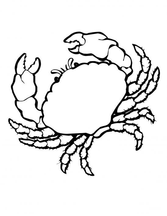 shells colouring  clipart best