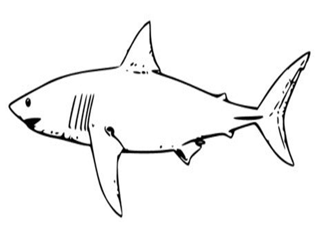 Hammerhead Shark Cut Out Pattern