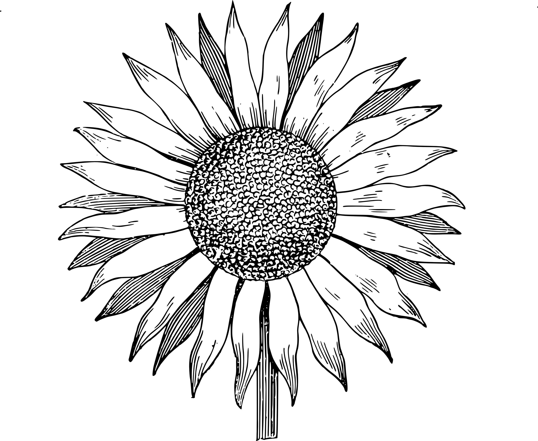 Sun With Flower Vector