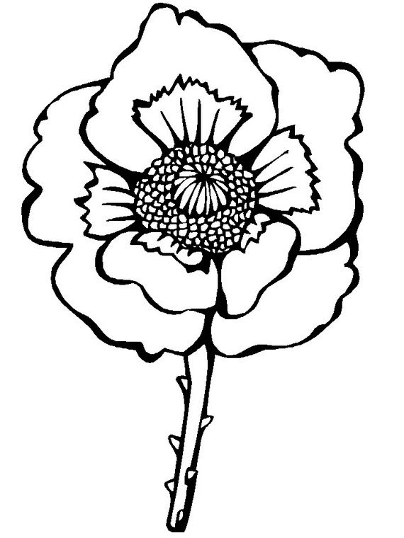 Anzac Day Poppy Colouring Pages