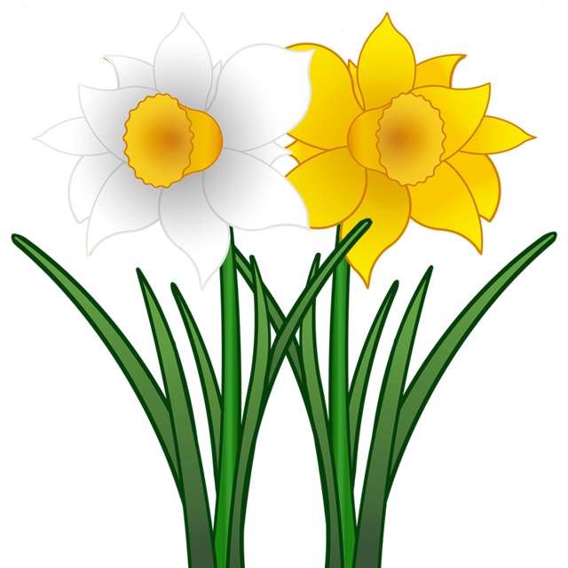 Clipart Narzisse - ClipArt Best