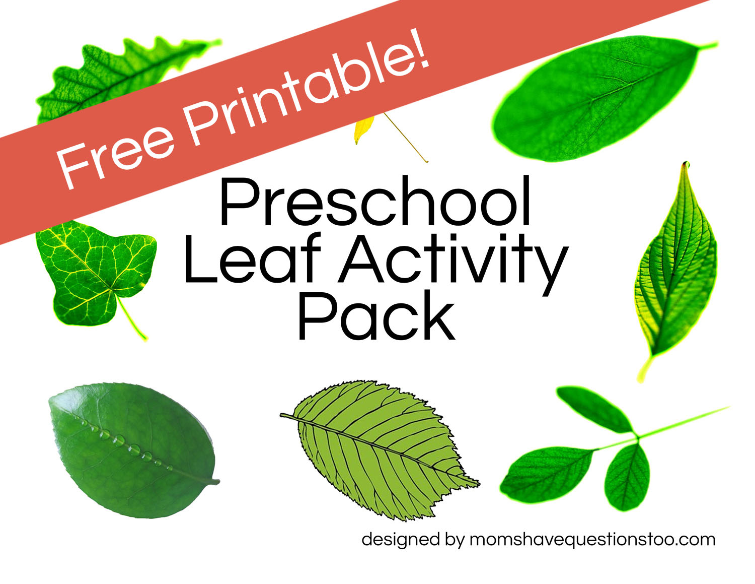 Leaf With Numbers For Preschoolers