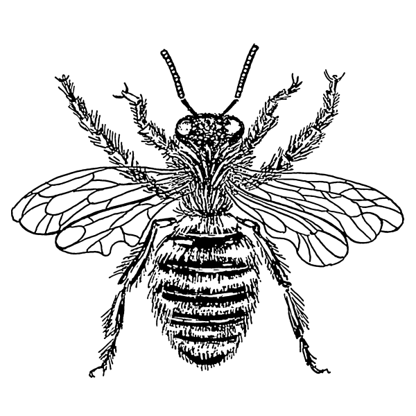 Bee Line Drawing - Clipart