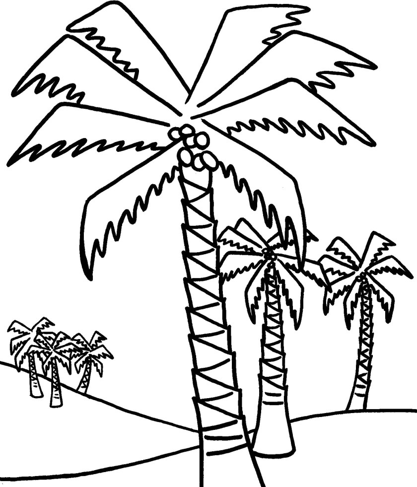 a lot of palm trees coloring pages  trees coloring pages