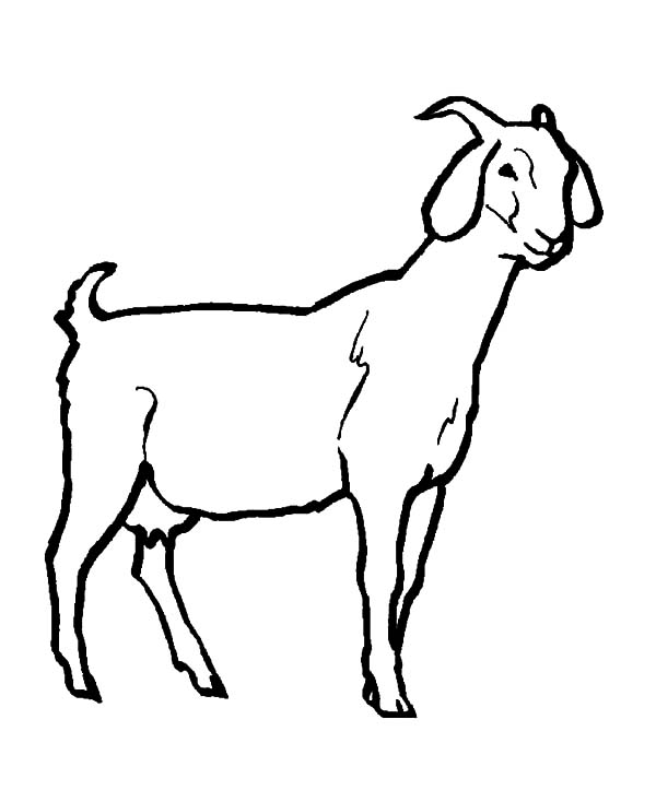 Dairy Goat Pages Coloring Pages