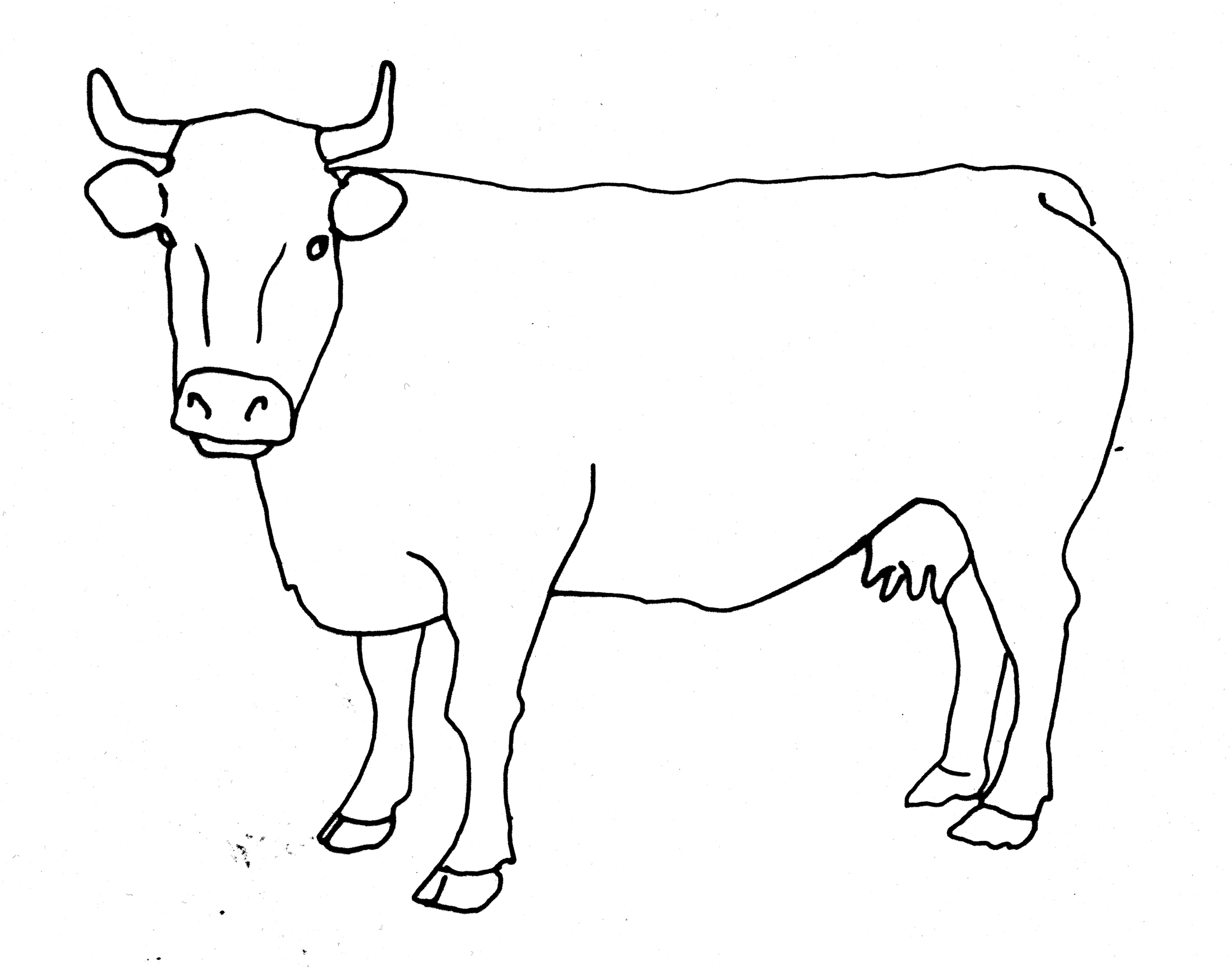 Line Drawing Cow