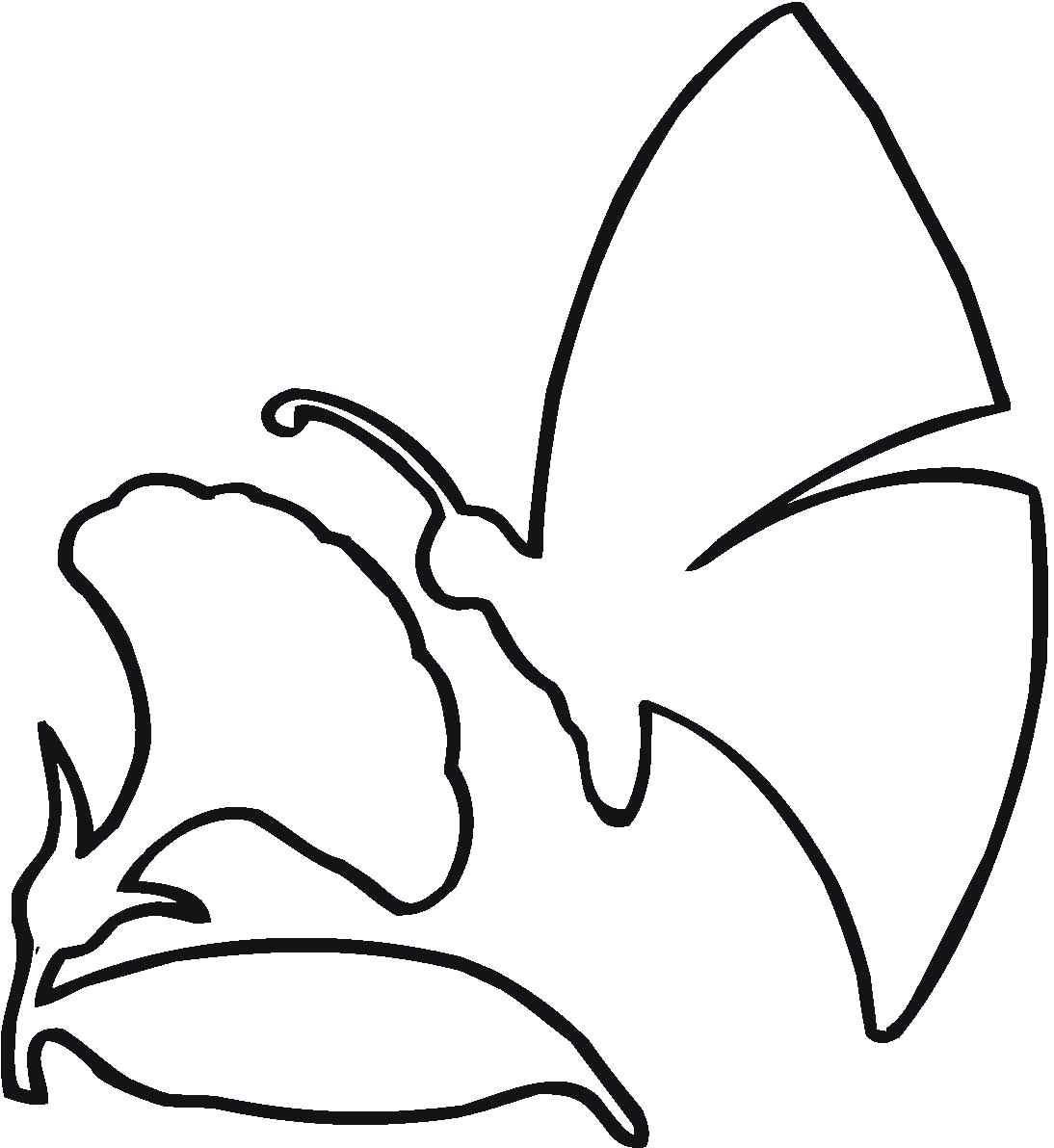 Butterfly Drawing Outline