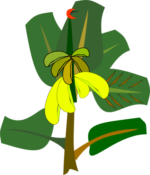 bananas tree clipart royalty