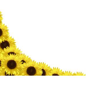 sunflower border - clipart