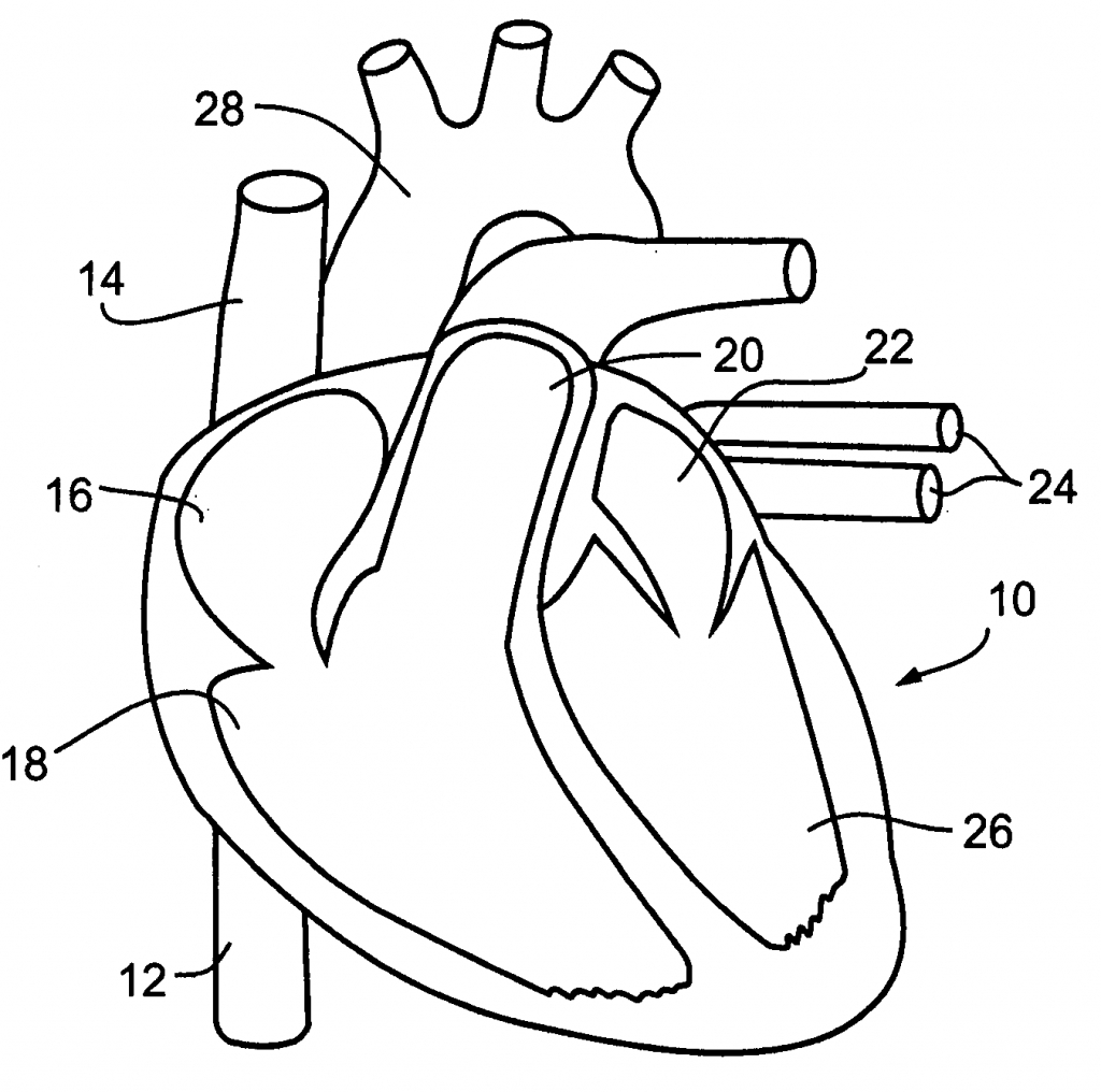 Circulatory System For Kids Coloring Pages