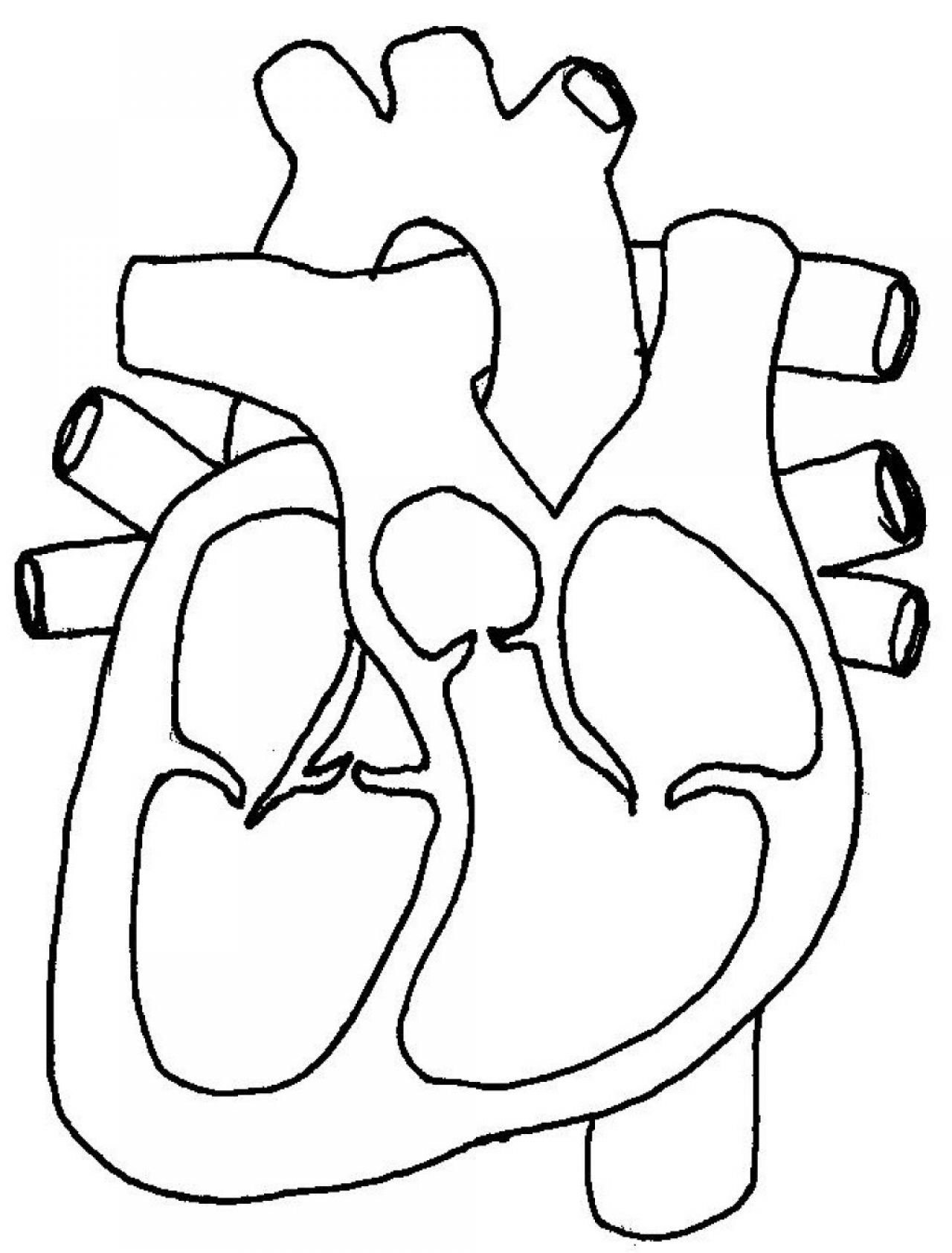 Blank Diagram Of The Heart