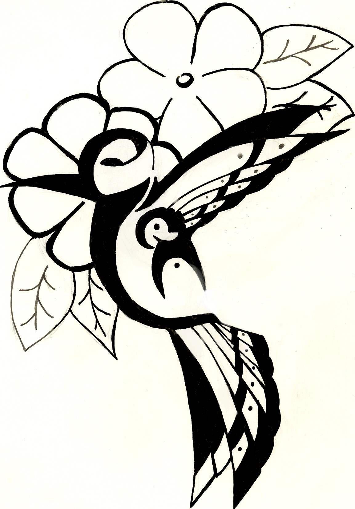 Humming Bird Drawings