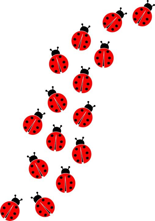 ladybugs - clipart