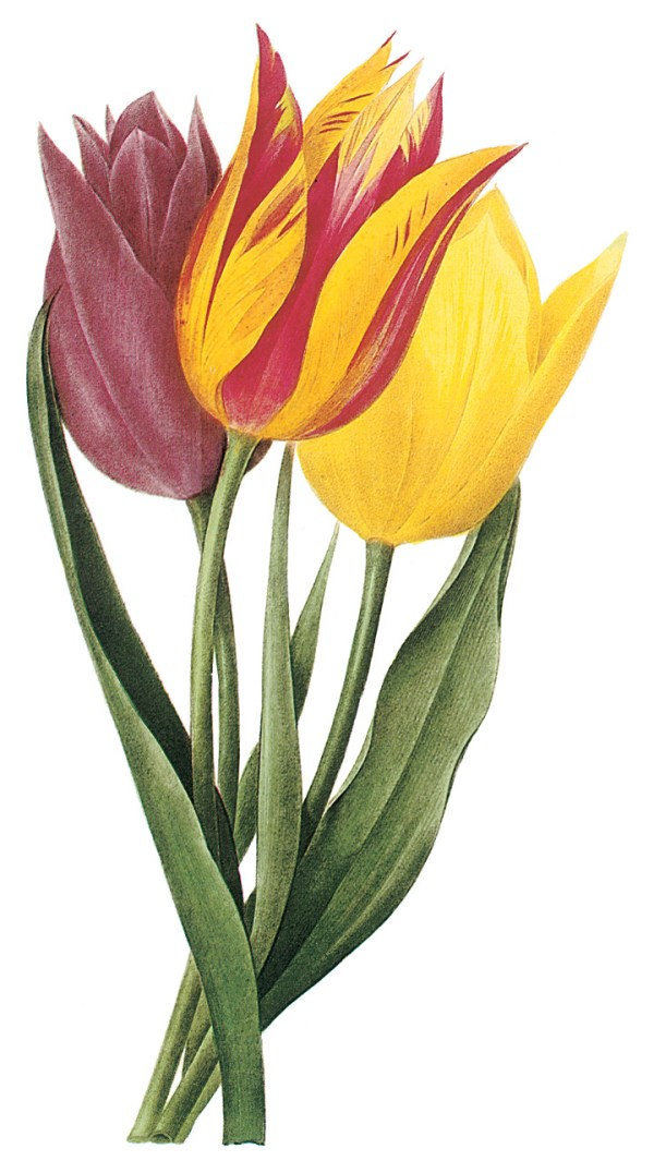 free clip art spring flowers