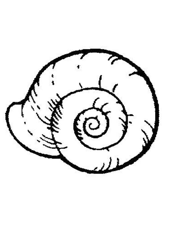 Snail Shell Drawing ClipArt Best