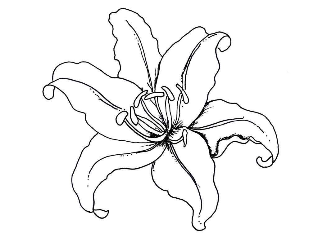 Rainforest Flower For Drawings