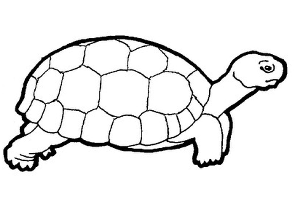 Turtle Clip Art The Turtle Aquarium