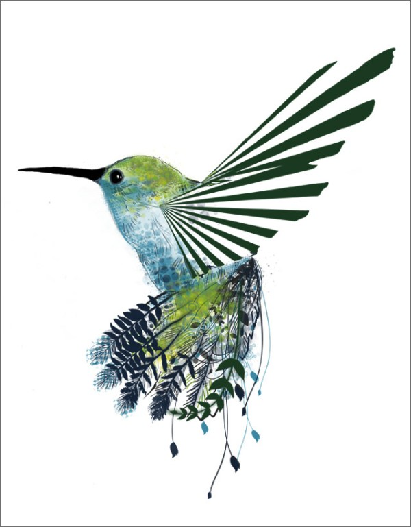 hummingbird drawings - clipart