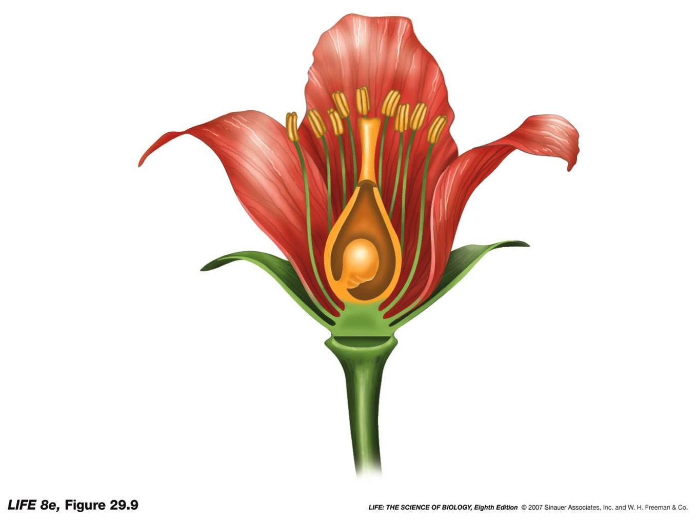 diagram of perfect flower lily land rover discovery wiring unlabeled clipart best