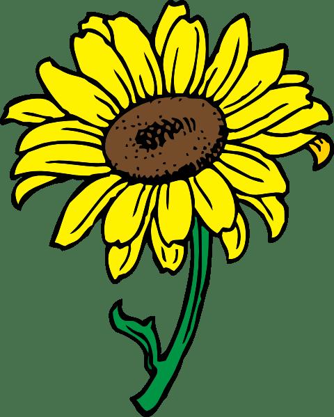 sunflower outline - clipart