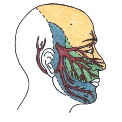Trigeminal Nerve Diagram Archimate Example Of The Intestines Free Engine Image For