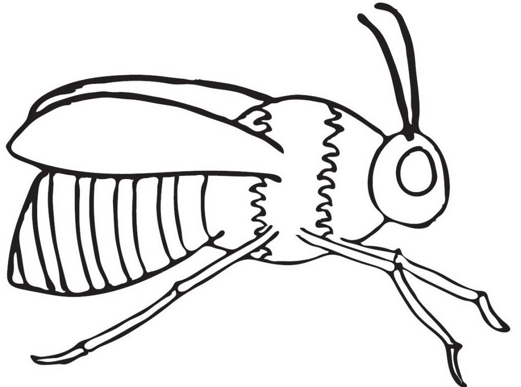 Honey Bees Colouring In Picture