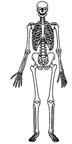 skeleton diagram blank tropical rainforest soil skeletal system - clipart best