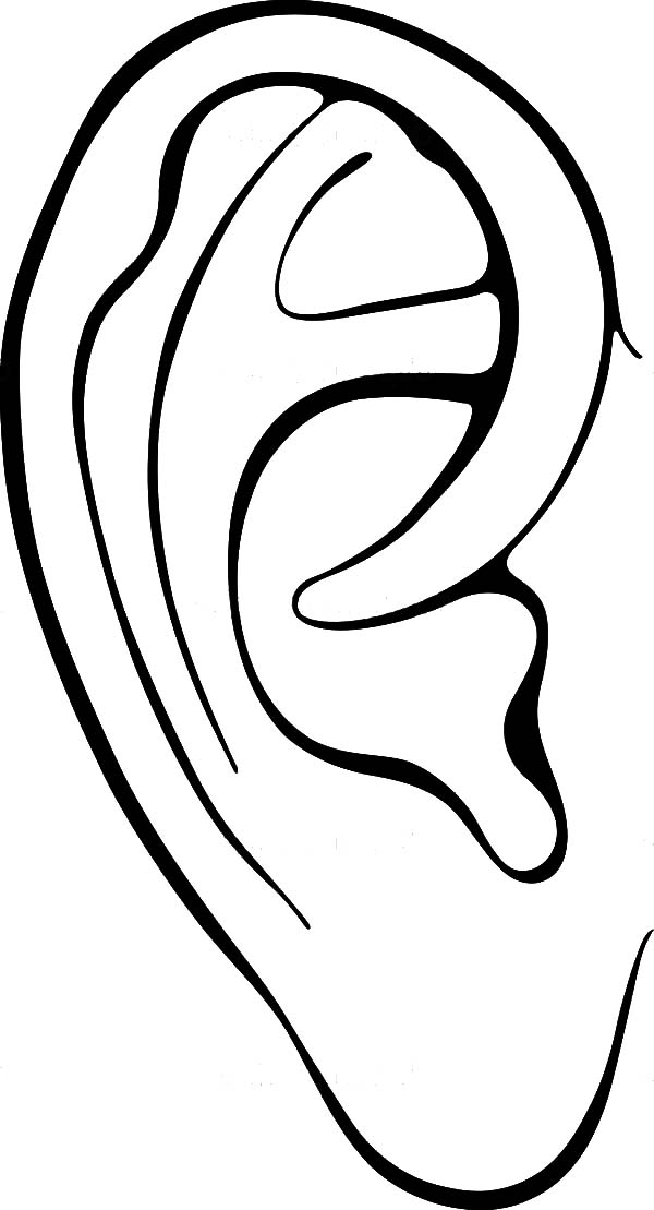 Ear Pictures For Kids ClipArt Best
