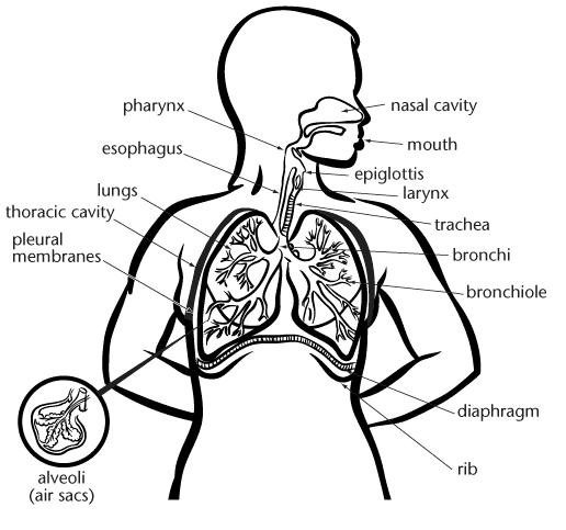 Citric Acid Cycle Blank Worksheet. glycolysis worksheet p