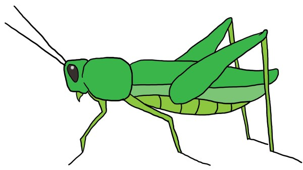 cartoon grasshopper - clipart