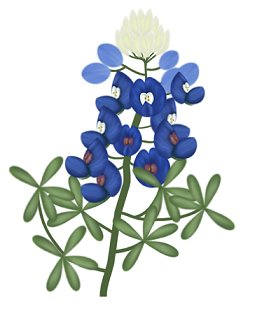 Pracken39s Paint Shop Pro Tutorials Bluebonnets ClipArt