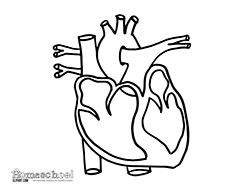 unlabeled heart diagram cross section ez go golf cart wiring pdf circulatory system for kids coloring pages - clipart best