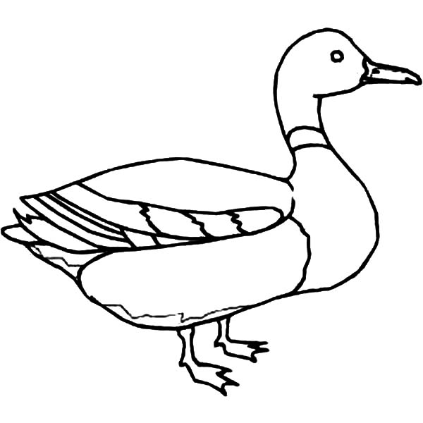 Outline Of Duck