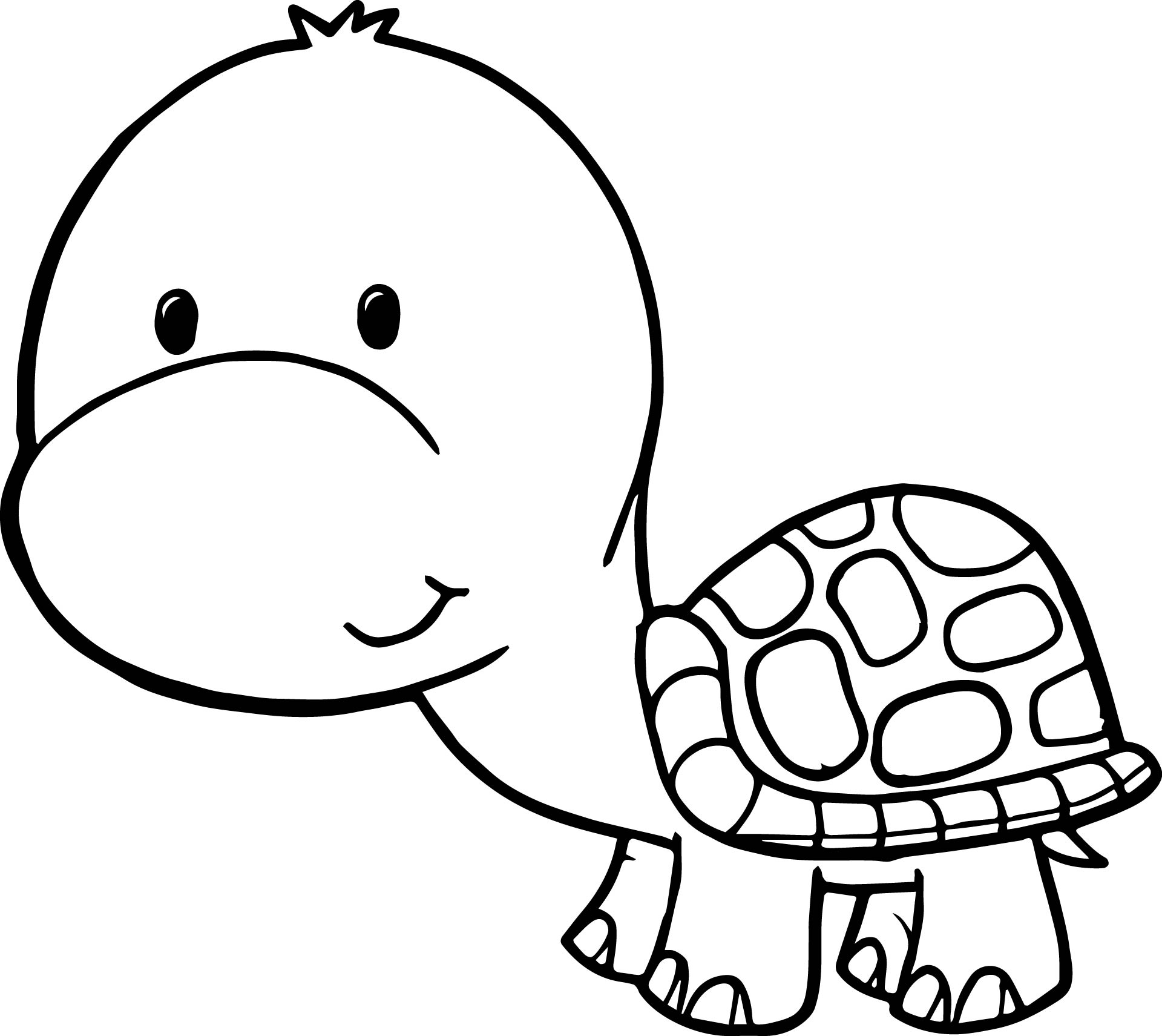 Tortoise For Coloring