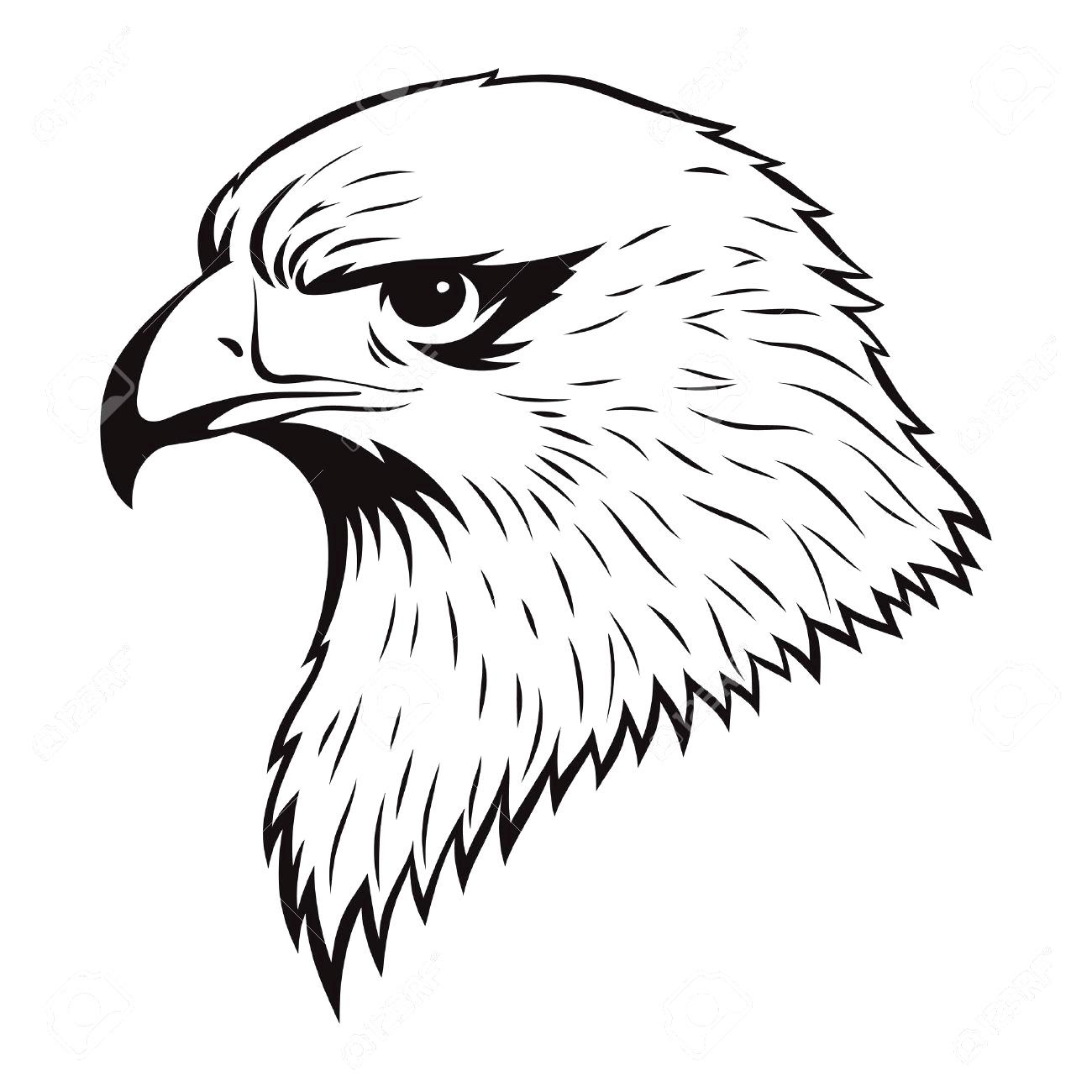 Eagle Drawings