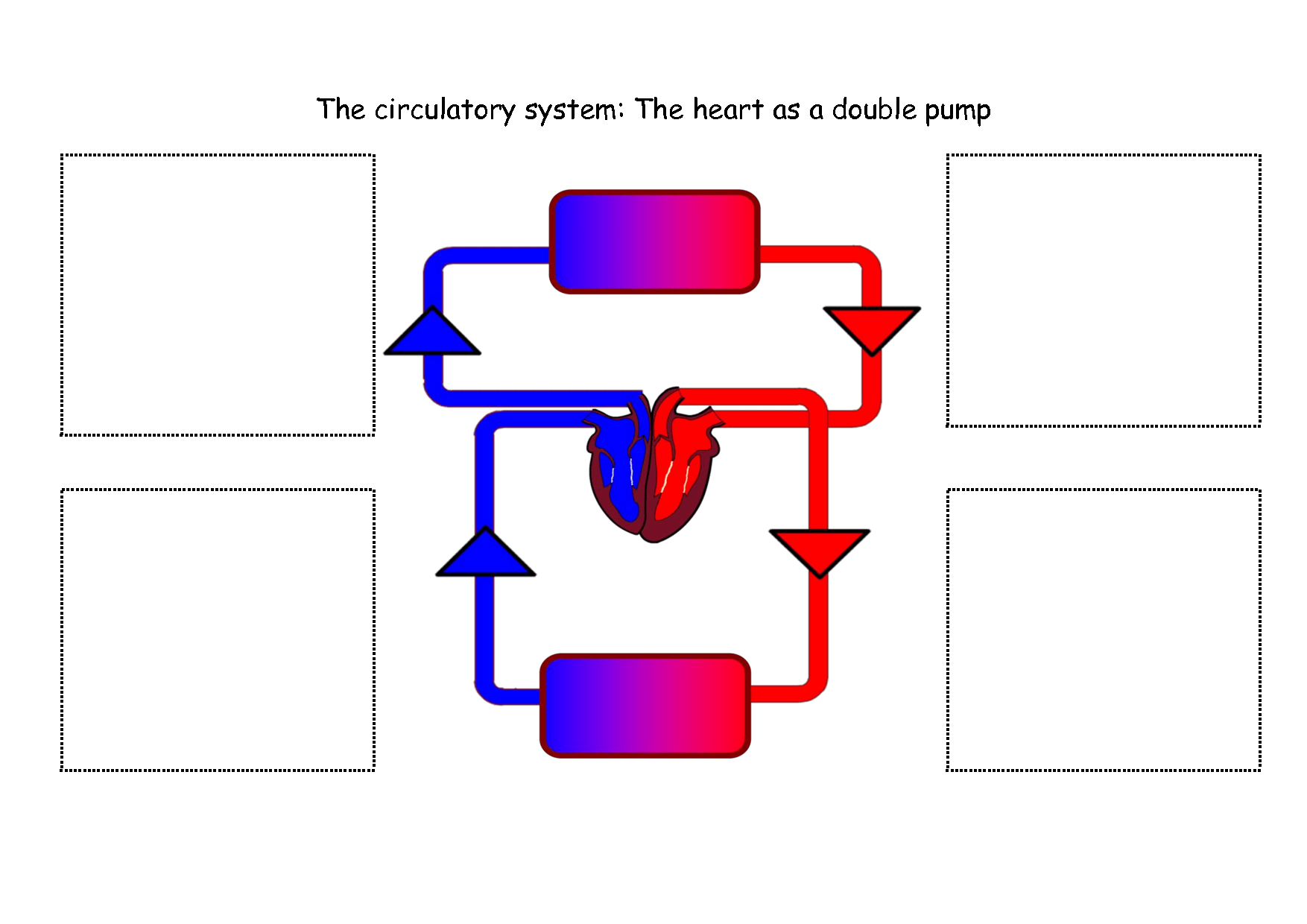 circulatory system diagram to label yamaha g1 golf cart solenoid wiring the for kids clipart best