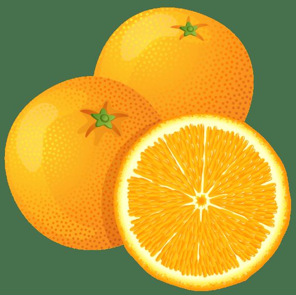 cartoon orange tree - clipart