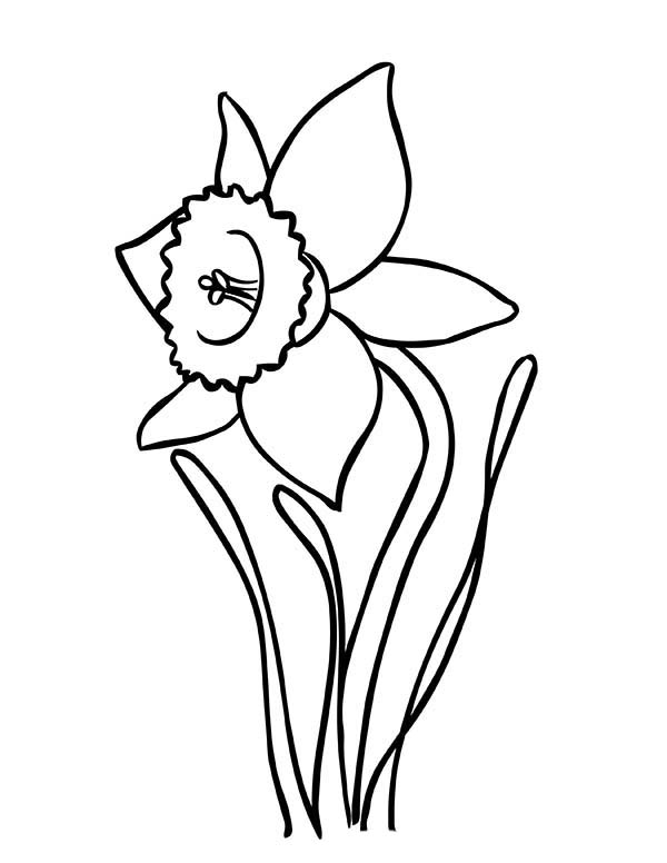 Daffodil Coloring Pages Coloring Pages