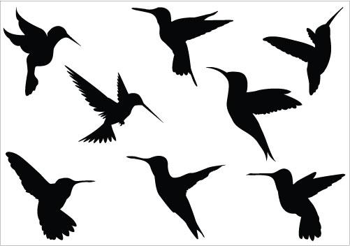 hummingbird clipart black and white