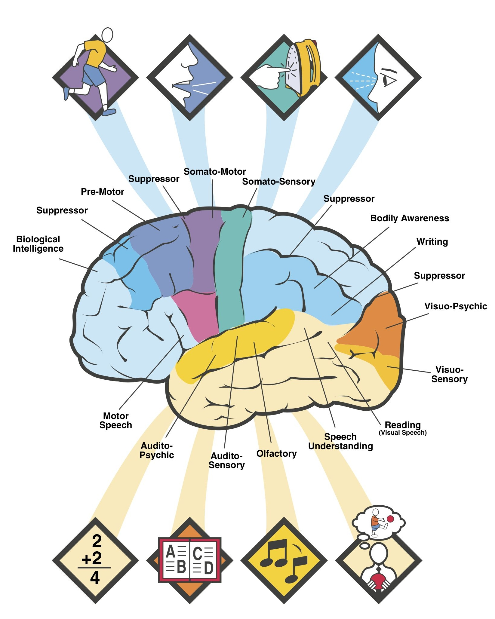 Brain Blank Diagram