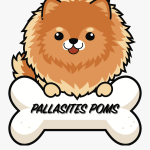 Cute Pomeranian Dog Cartoon Clipart Png Download Pallasites Poms Free Transparent Clipart Clipartkey