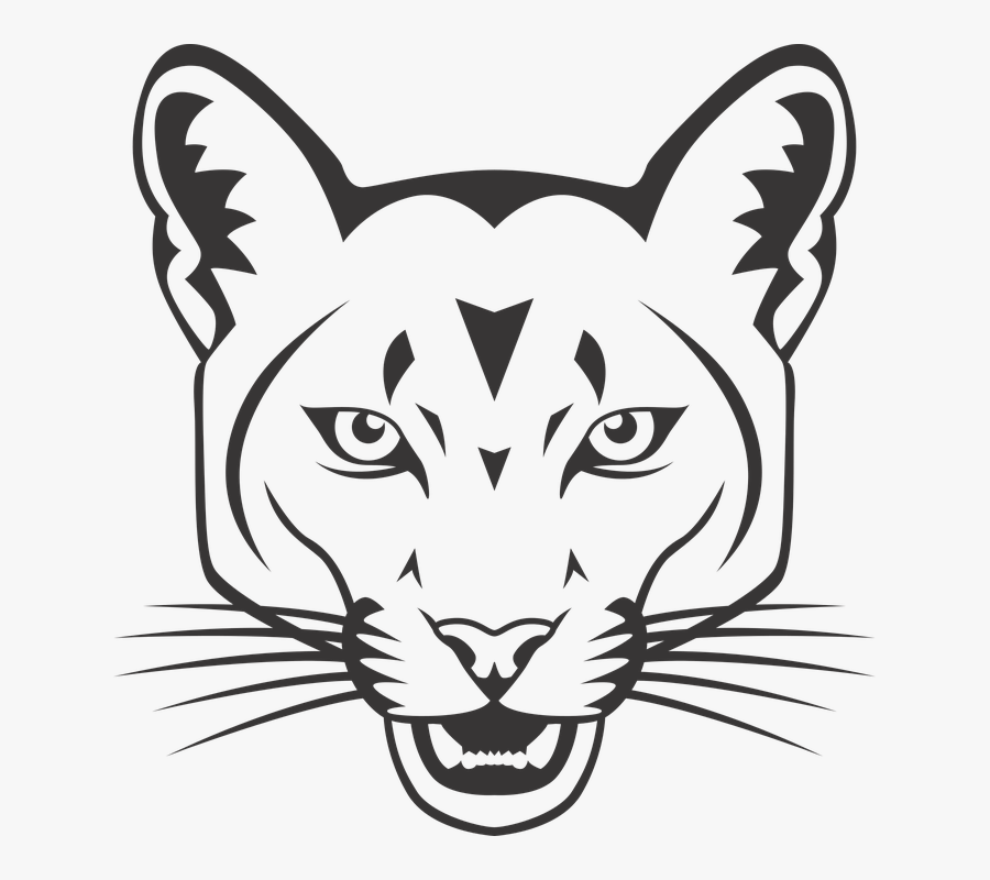 Cougar Head Mountain Lion Draw A Mountain Lion Clipart Free Transparent Clipart Clipartkey